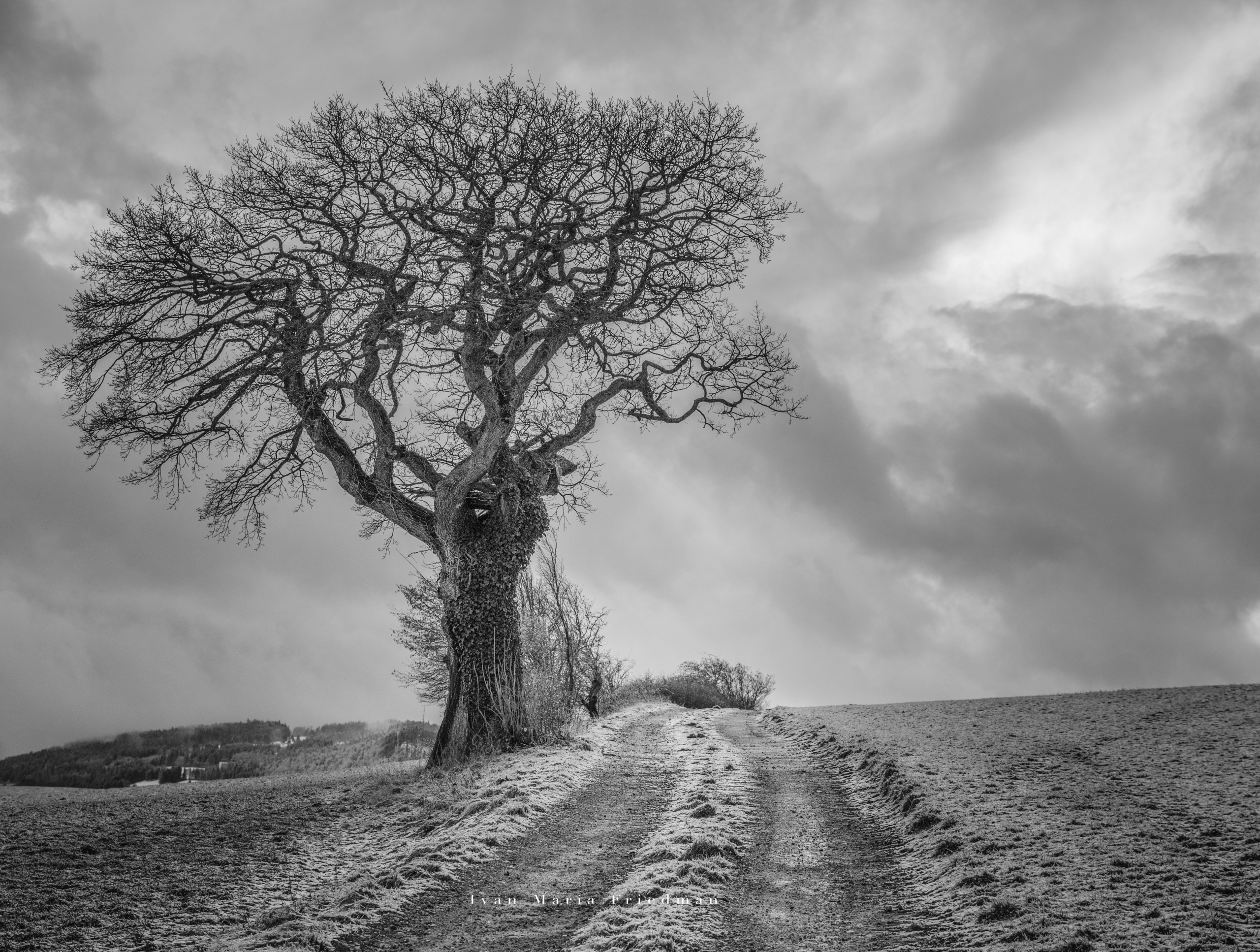 arbre champs path.jpg