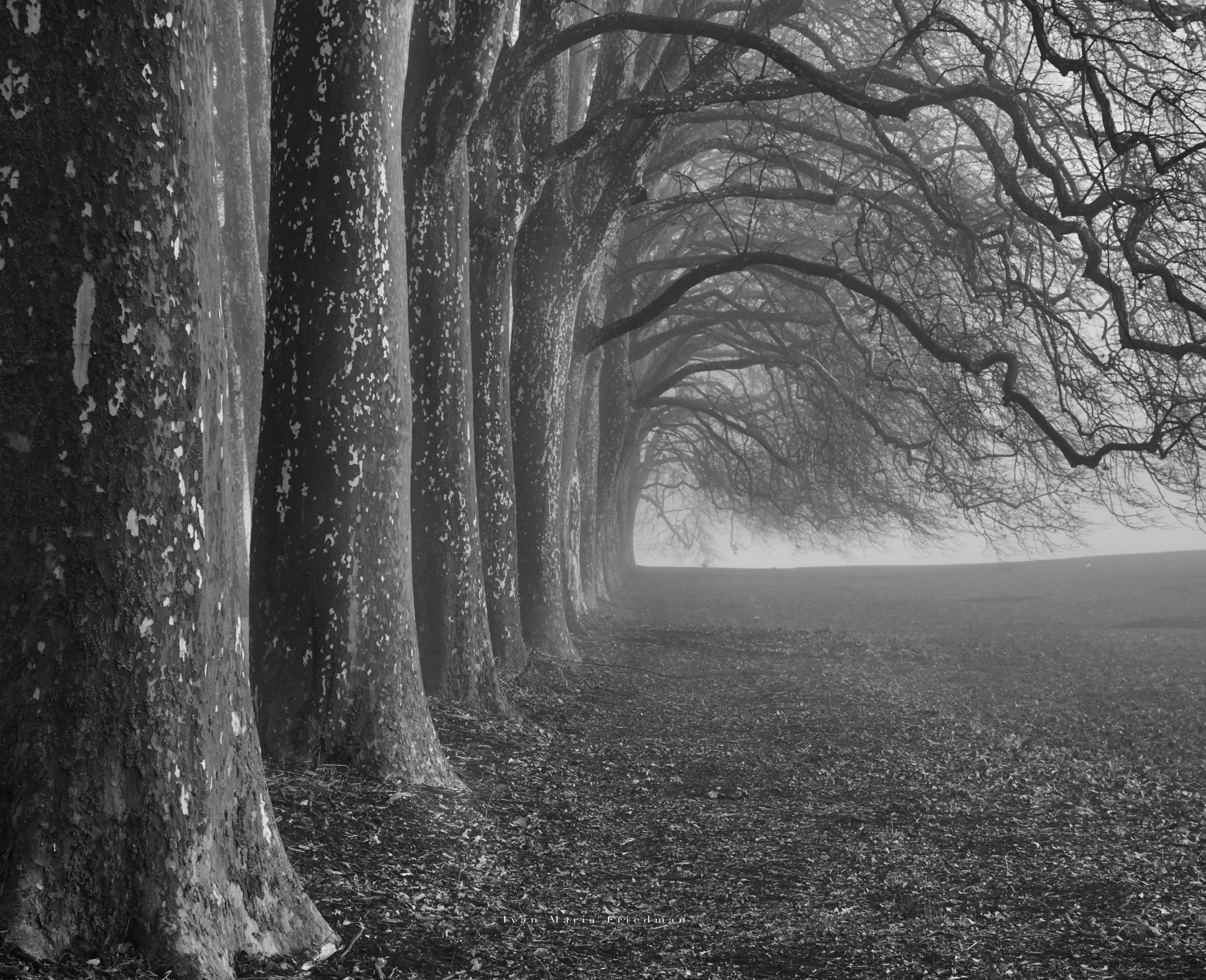 rangée d'arbres side BW.jpg