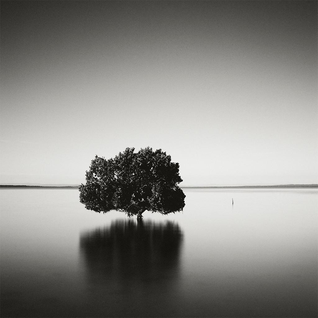 mangrove1.jpg