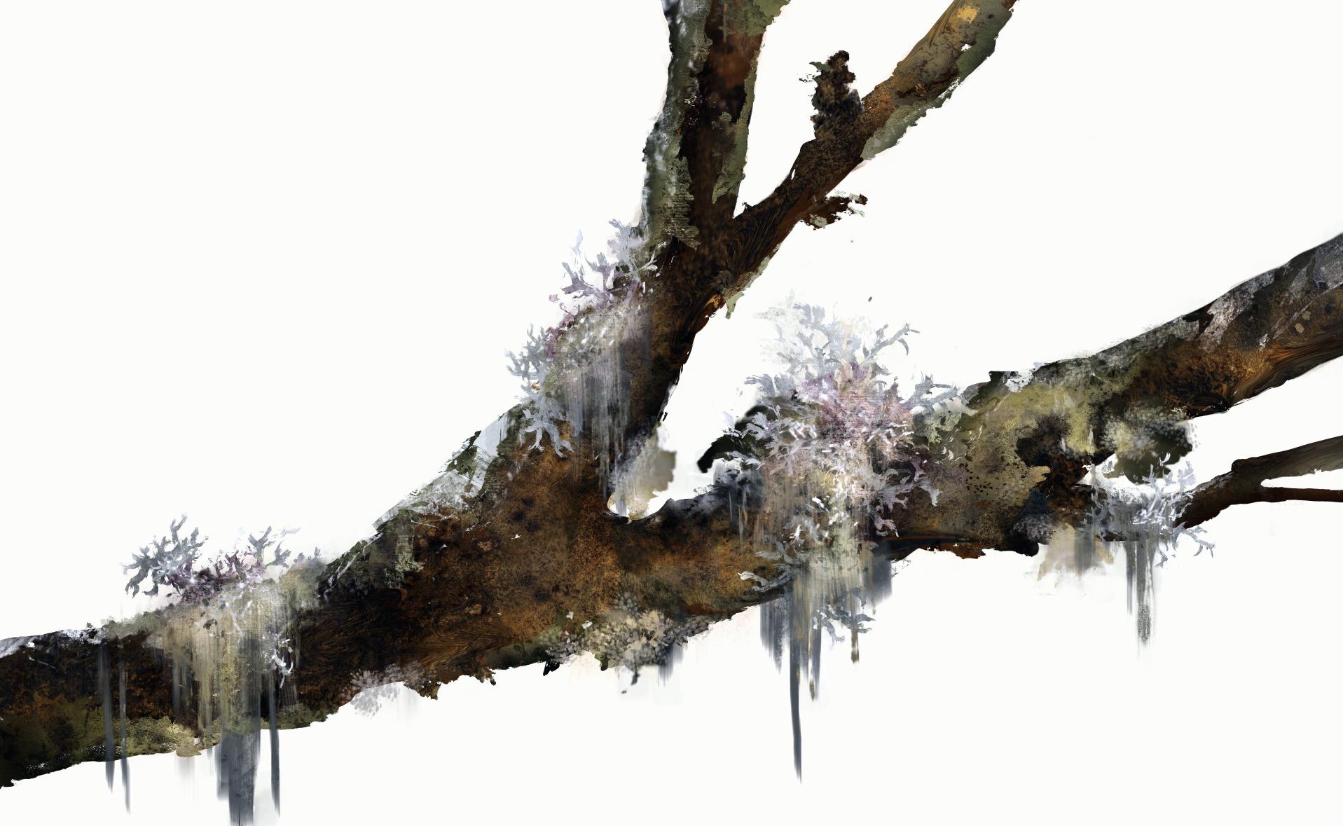 Plants_Oakmoss_Illustration_Julie Smits_Light.png