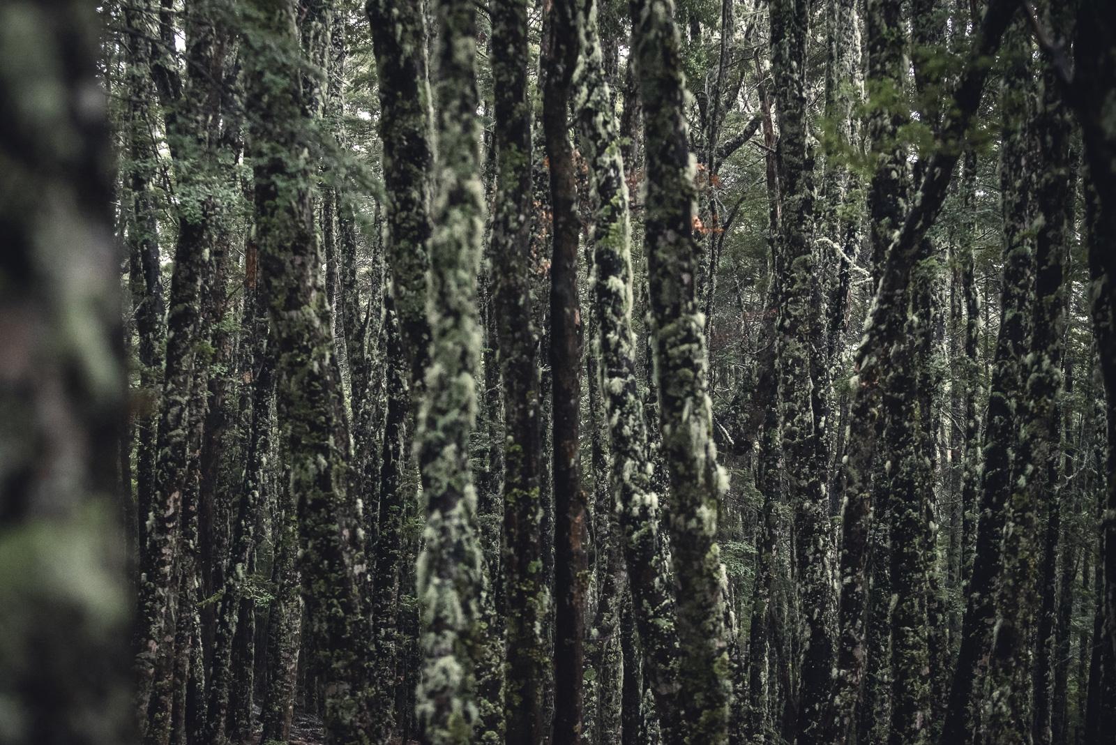 DTrumpore_2016_Yeti_NZ_LoRes_-151.jpg