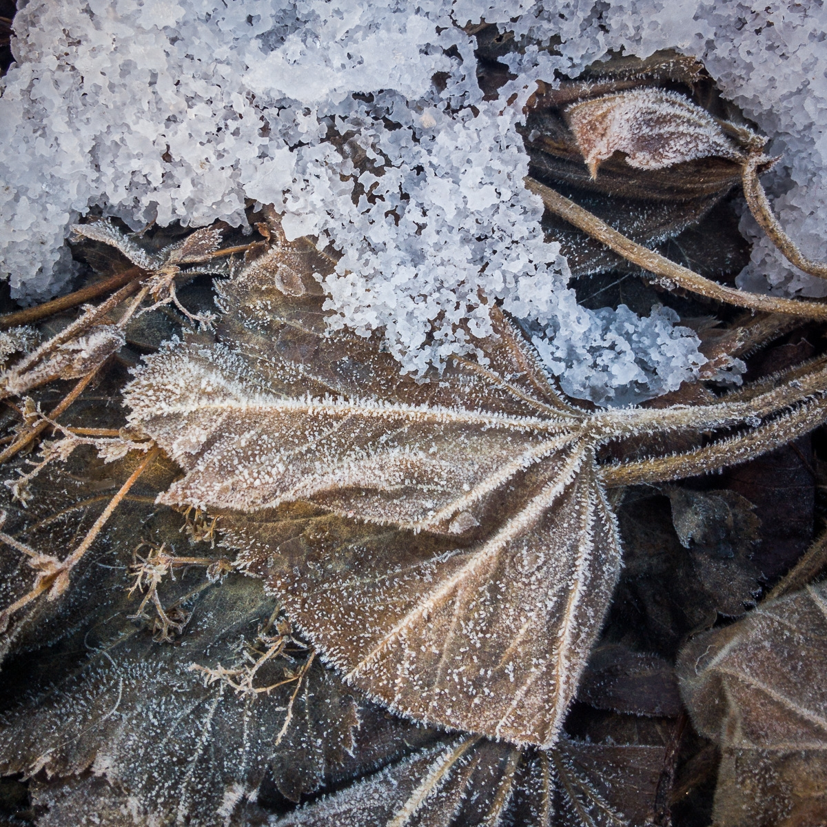 frost-2.jpg