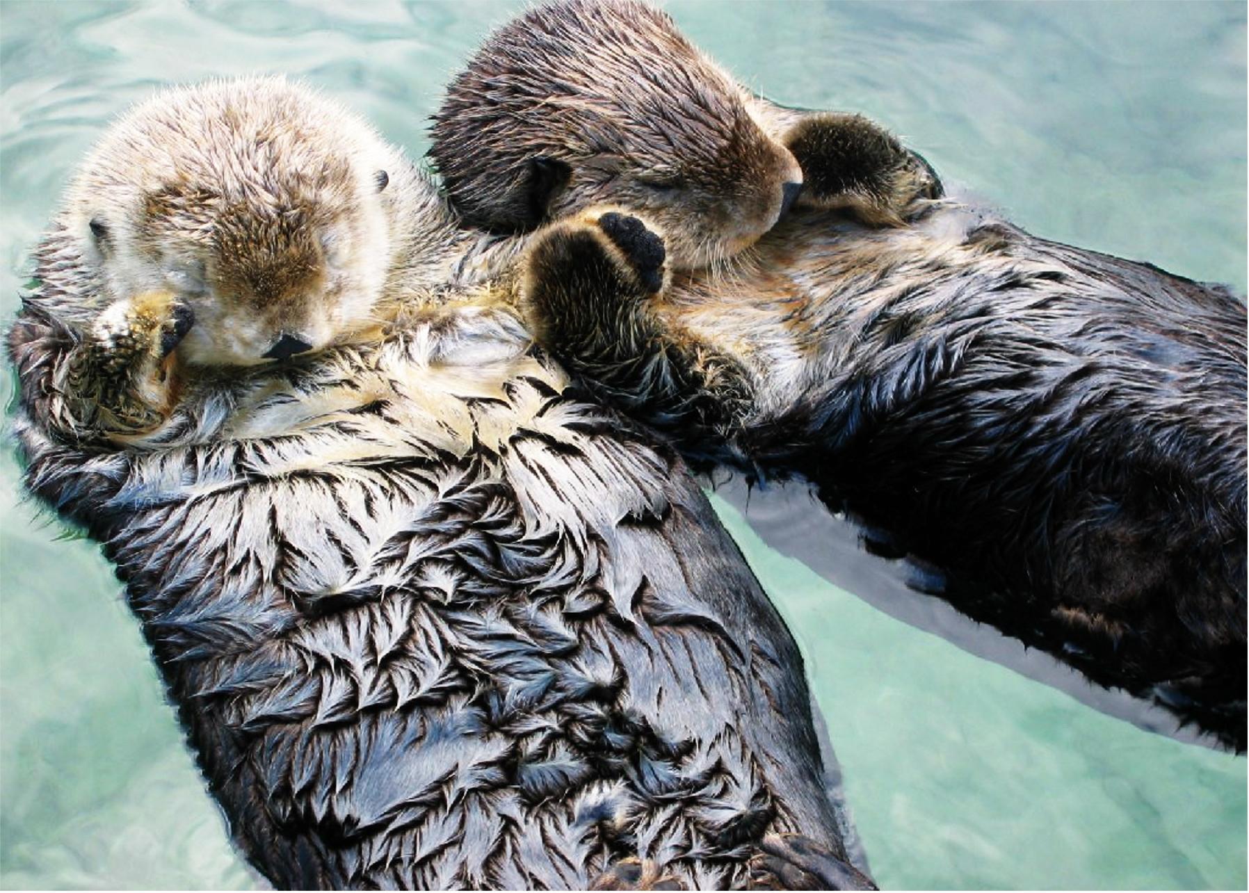 The Dark-Skinned Otter.jpeg