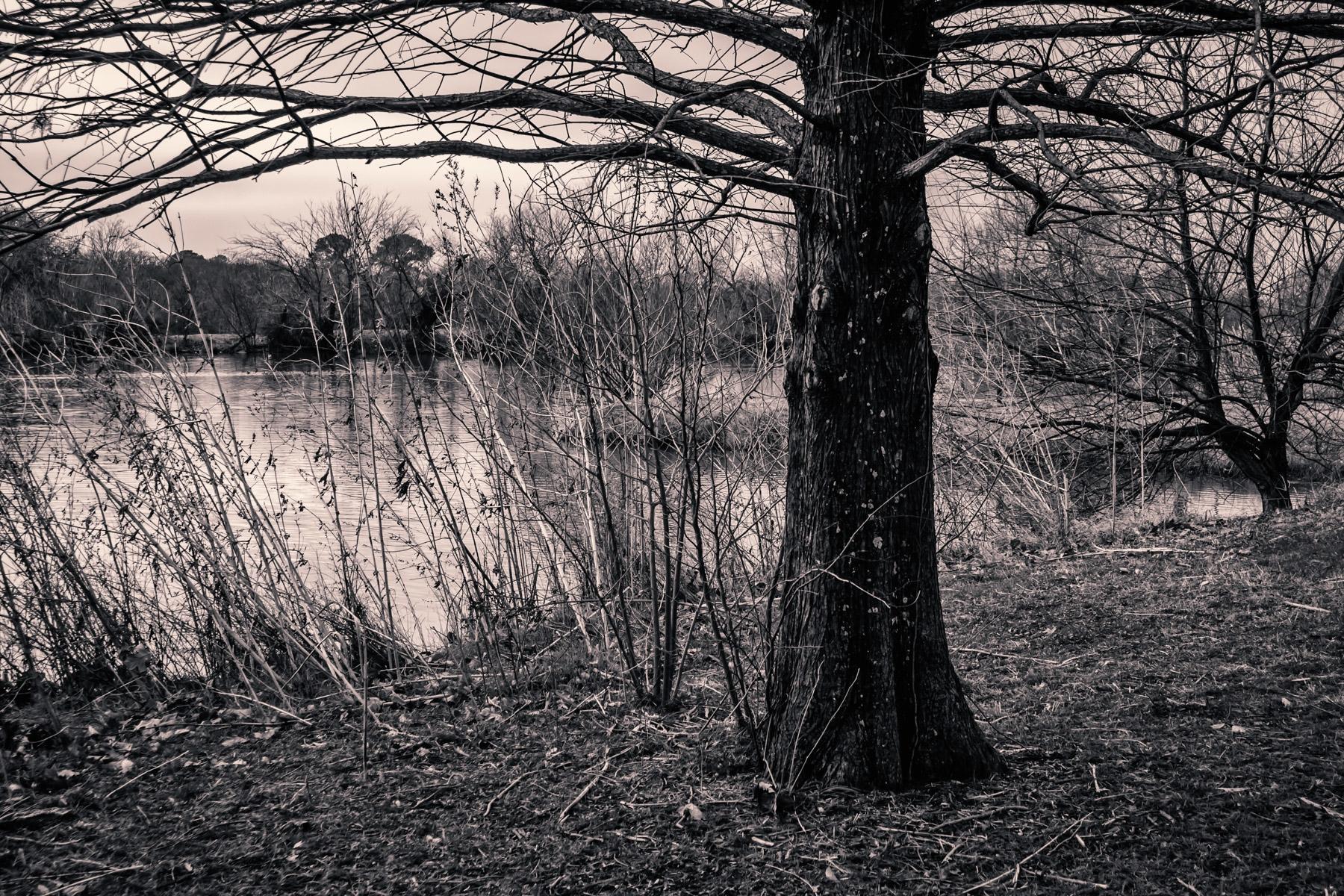 denton unt pond trees.jpg