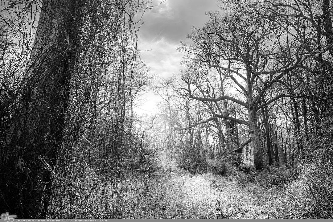 04-19_secretforest.jpg