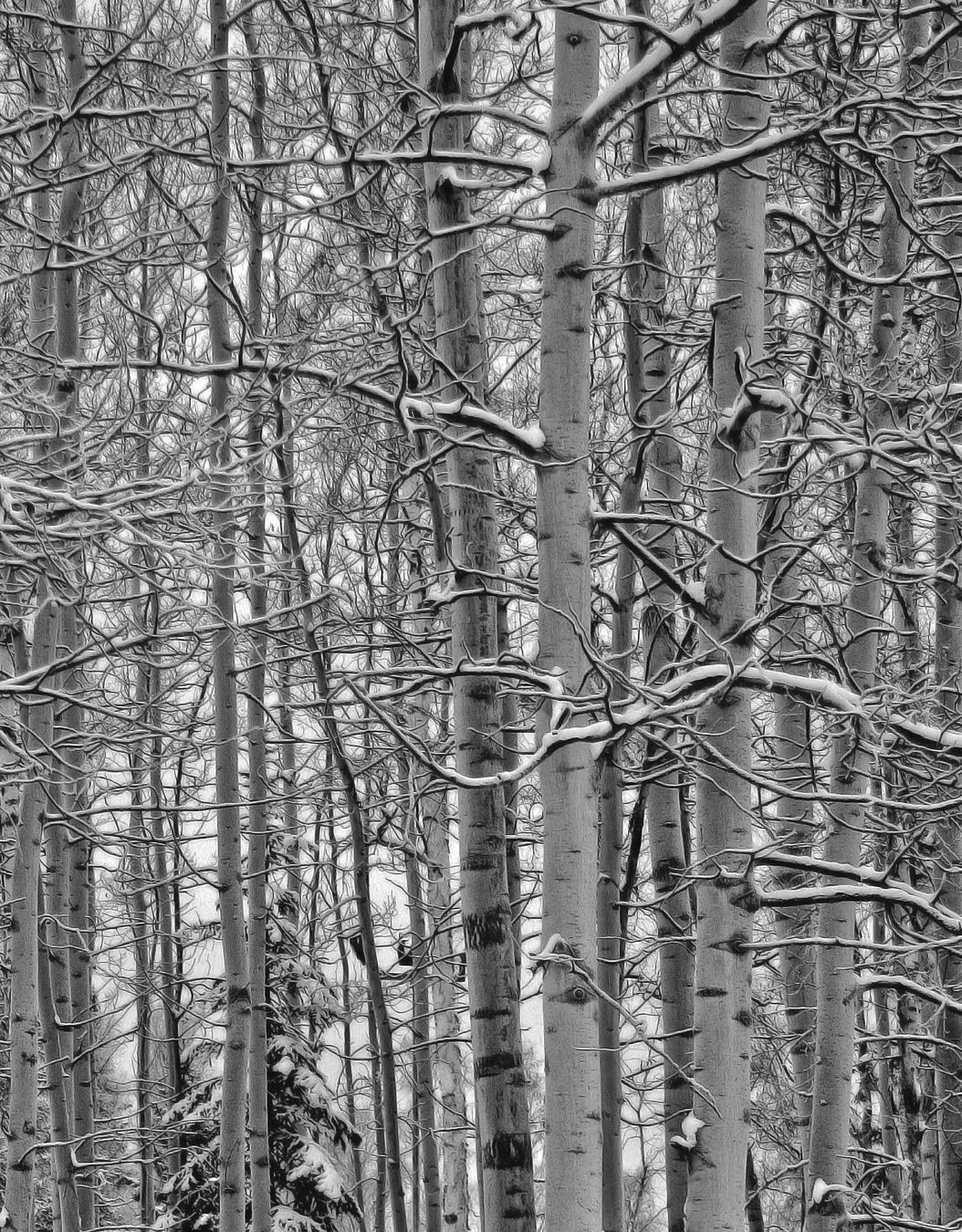 Walk in the Woods 2 Crop.jpg