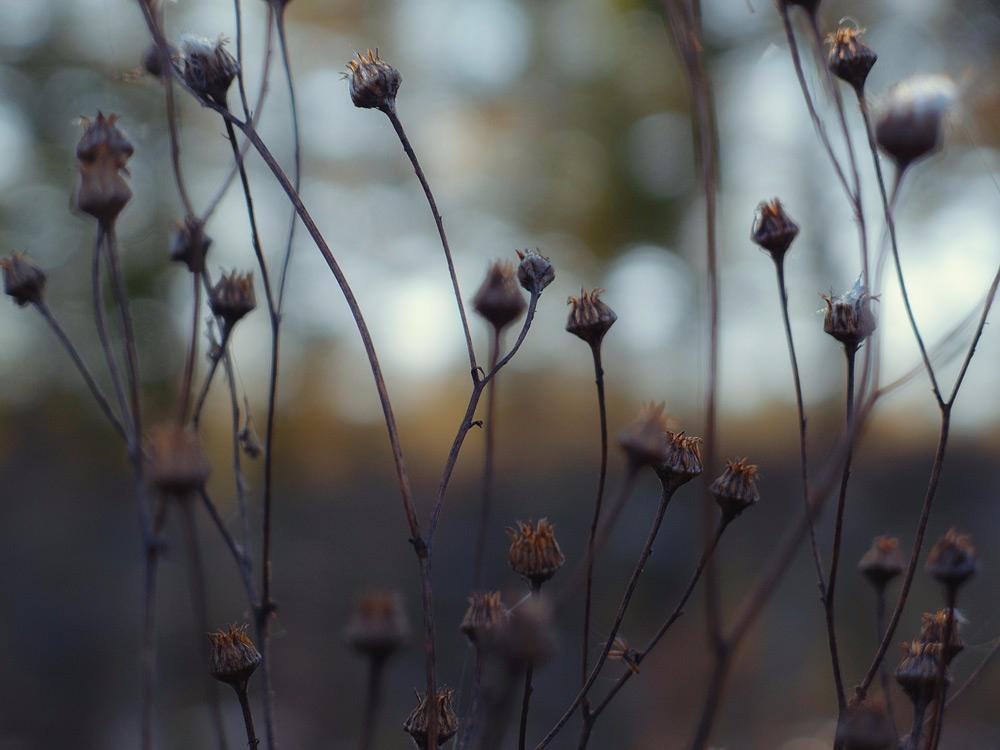 Autumn blues - grass, autumn, meadow - andreigrigorev   ello